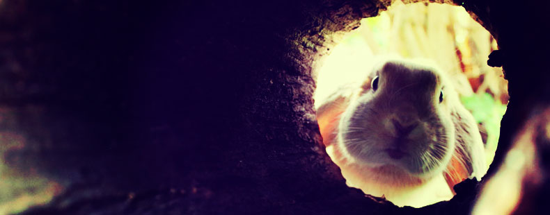 image of rabbit hole