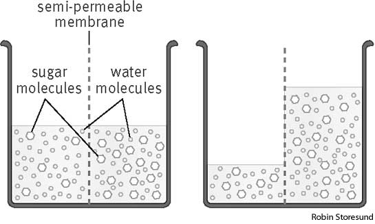 Osmotic pressure is the energy driving osmosis and is important for living organisms because it allows water and nutrients dissolved in water to pass ...