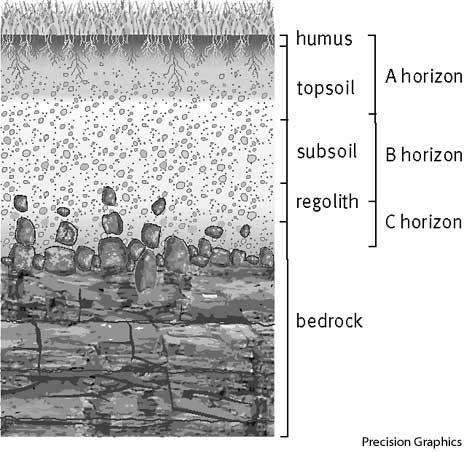 Abc soil define abc soil at for Scientific word for soil