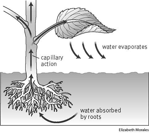 transpiration define transpiration at dictionary  : transpiration diagram - findchart.co